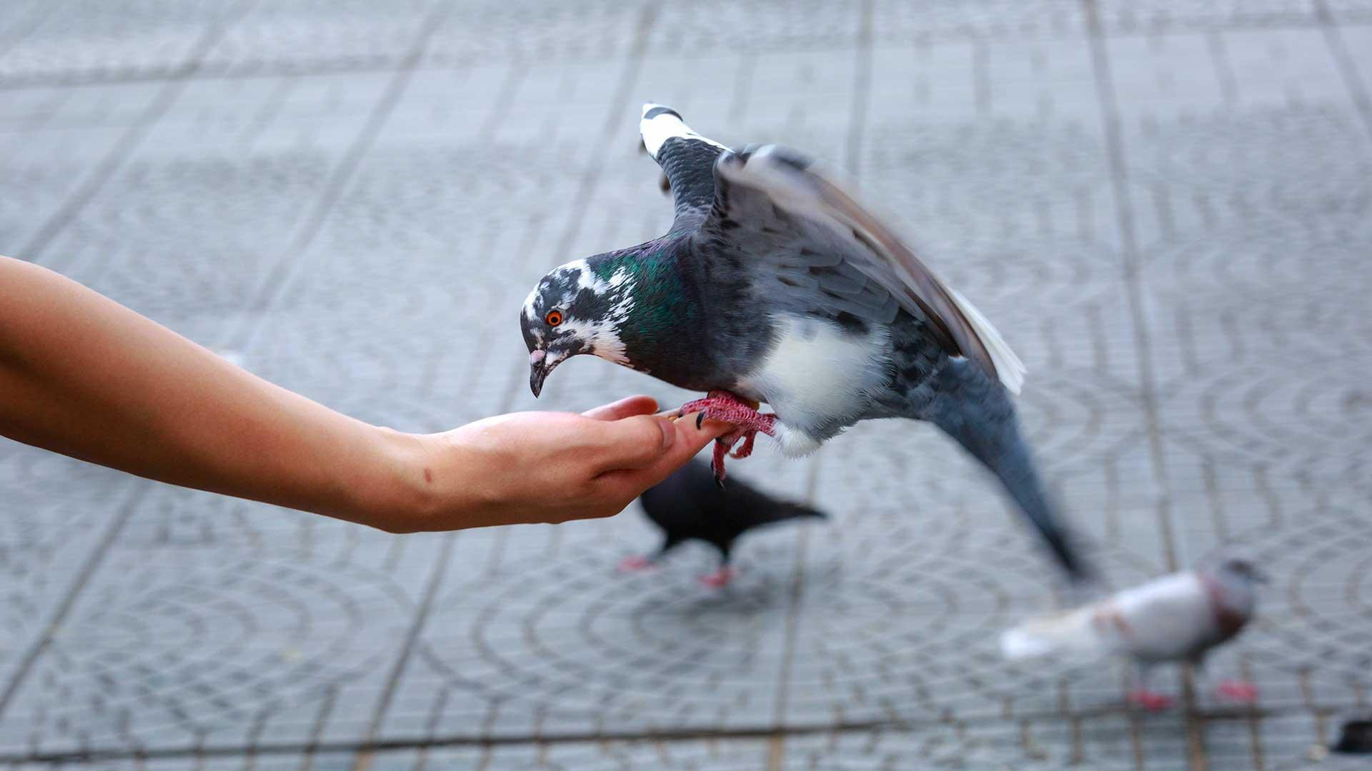 immagine-articolo-non-essere-un-piccione